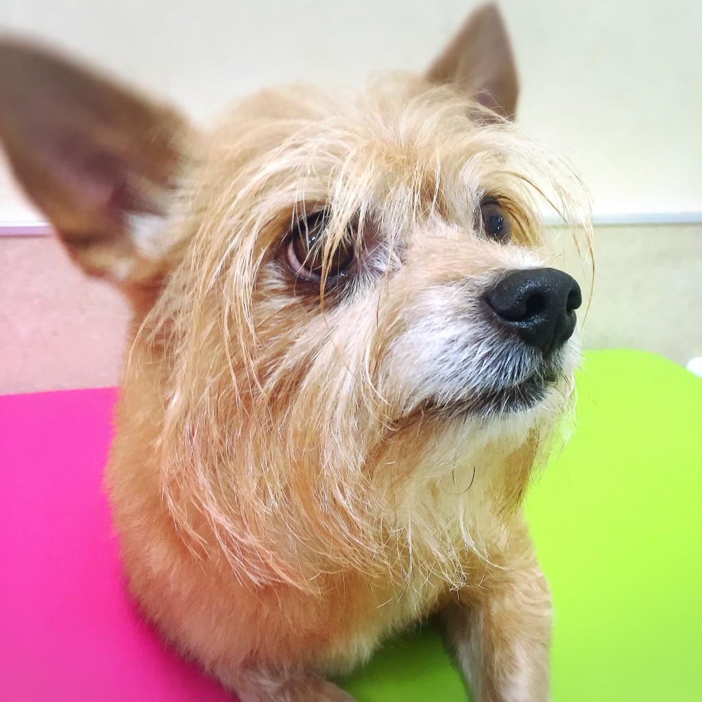 ぼくを 池田動物病院 トリミング ミックス犬